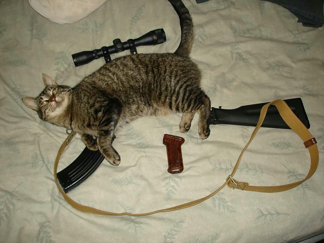 My cat-47
