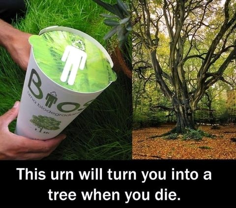 Cemeteries become forests with these amazing Bios Urns!