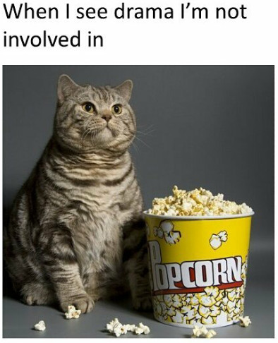 Cat Cats Eat Popcorn