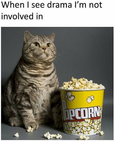Popcorn Eating Cat Drama