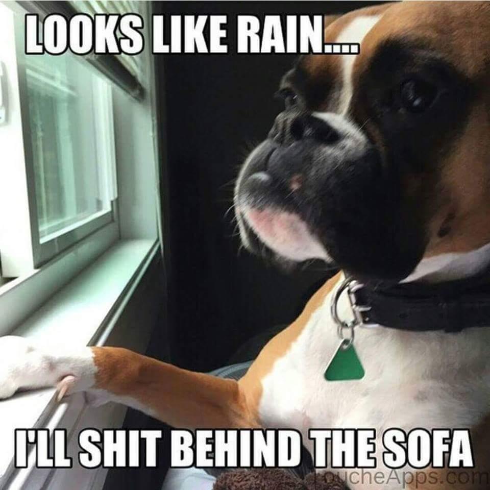 Dog Poop Meme By Payj94 Memedroid