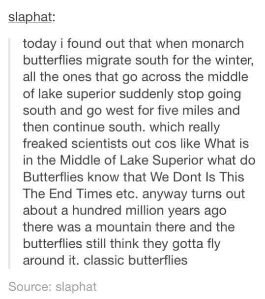 Dumb butterflies