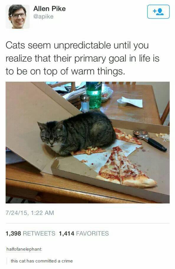 God damn it cat