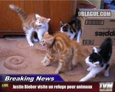 Il fait peur même au chats!!!!
