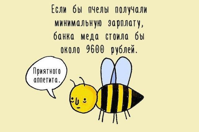 Анекдоты про пчел, пчеловодов, мед