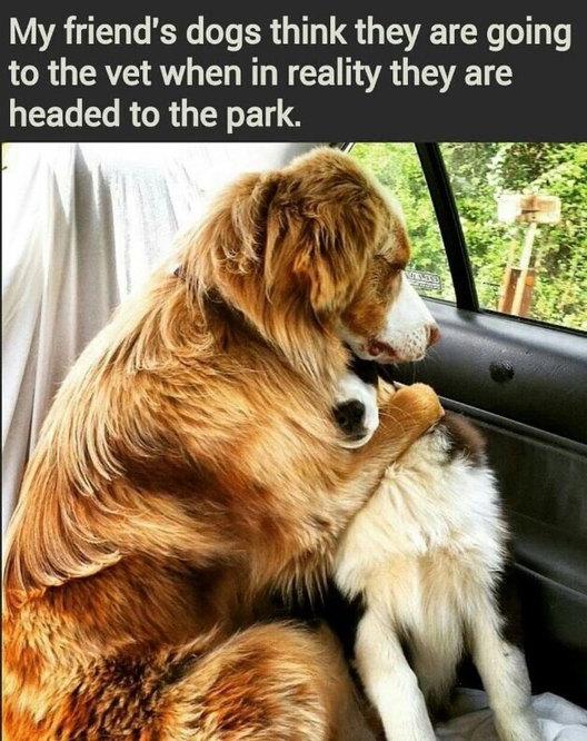 Dear Dog help us..