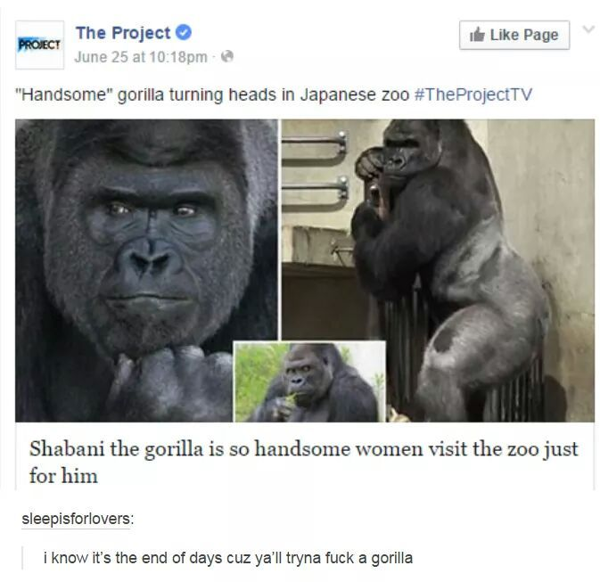 Feels when a gorilla gets more women than you