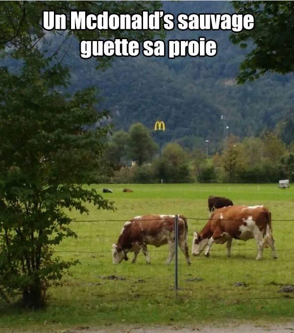 VIVE LA BOUFFE!!!