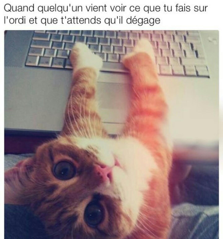 Lé chats