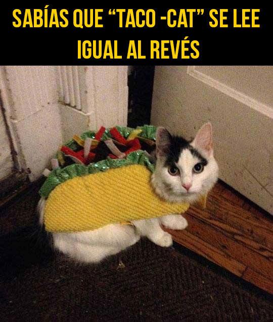 Taco Meme By Lord Illidan Memedroid