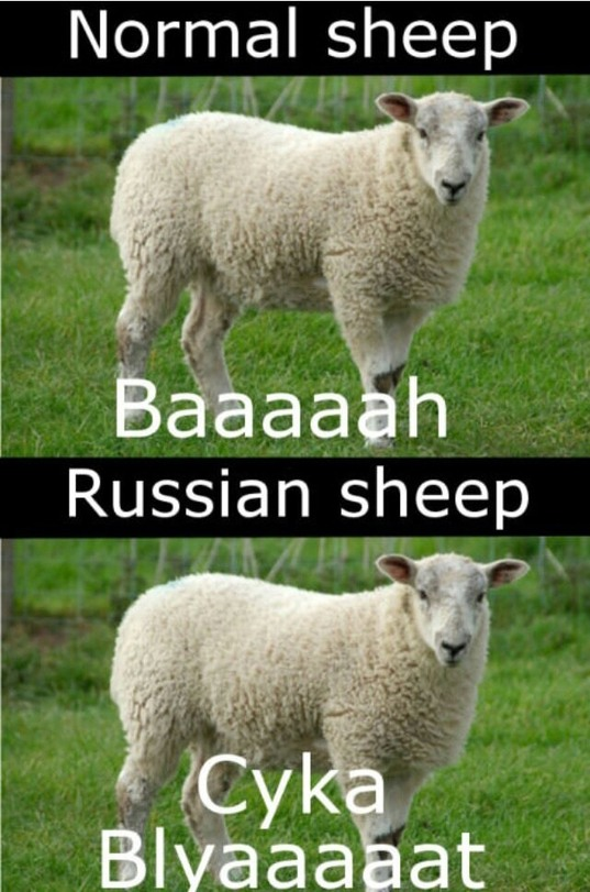 Sheep Are Cool Meme By Awaremix Memedroid