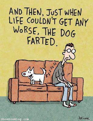 Dog farts are the best!