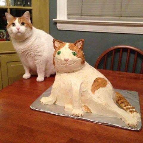 melhor gatu do brasiu