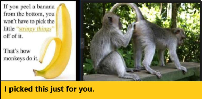 Do It Like The Monkeys Meme By Zumbagirl Memedroid