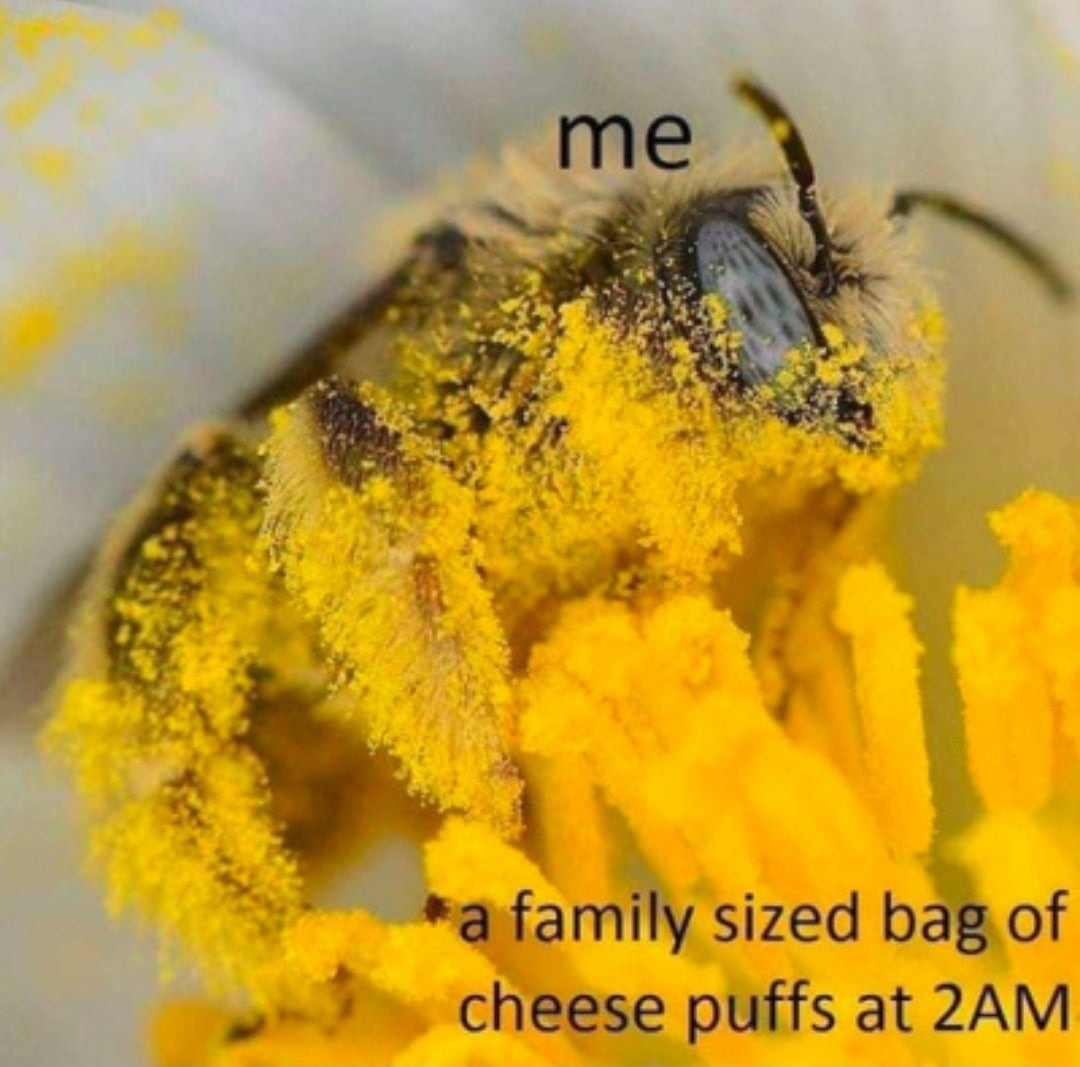 no shame at this point - meme
