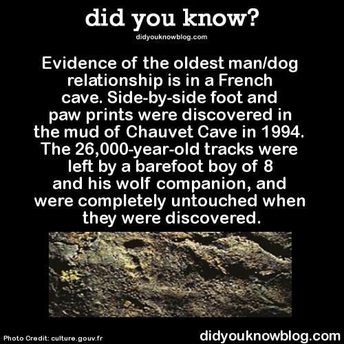 Companionship over 26,000 years ago - meme