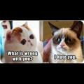 Anw c'est méchant !!! XD ( Snoppy cat VS grumpy cat )