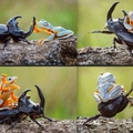 Les grenouilles domineront le monde !