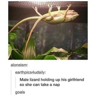 be my lizard? - meme