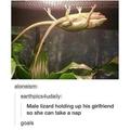 be my lizard?