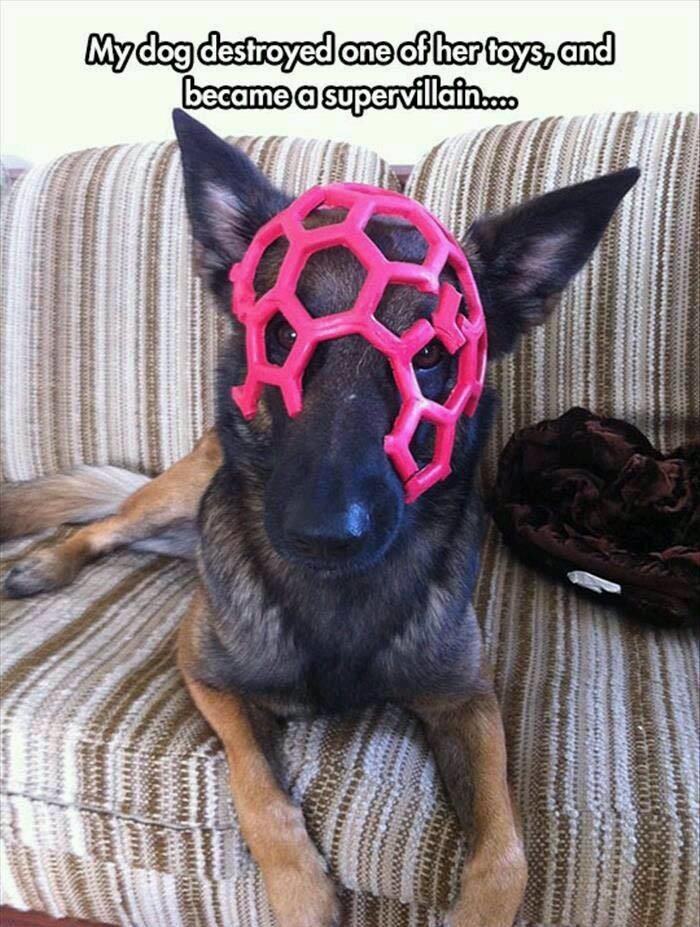 Dog the Supervillain - meme