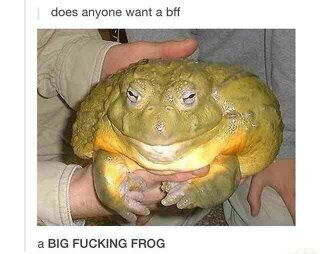 BFF - meme