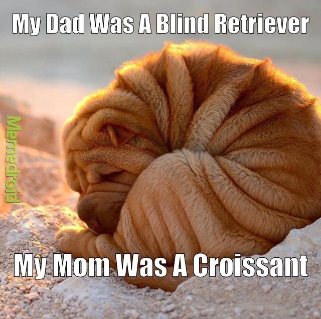mixed breed or mixed bread? - meme