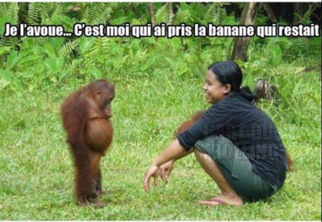 Tu veux une banane ? - meme