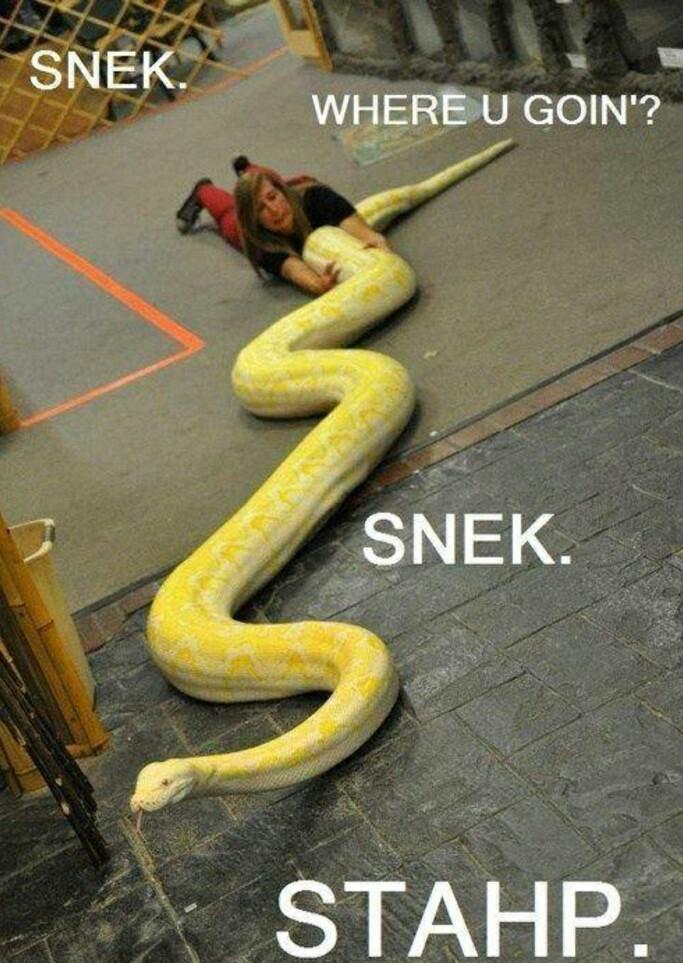 Sneeek sneek sneek!!! - meme