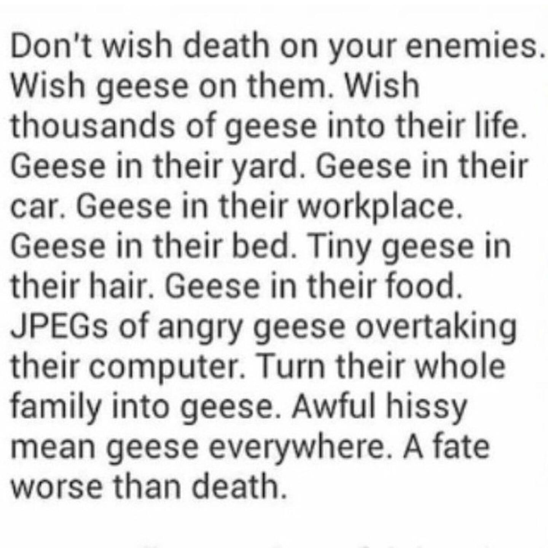 Geese, geese everywhere - meme