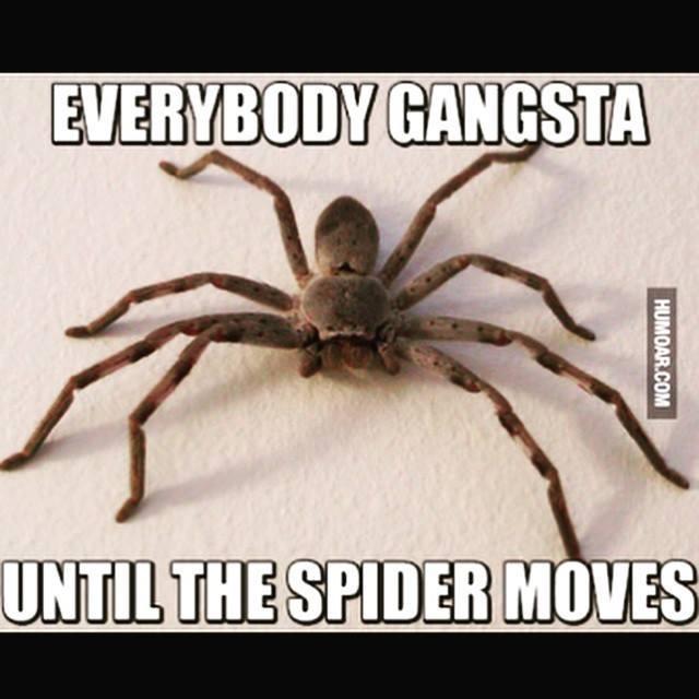 The best spider memes :) Memedroid