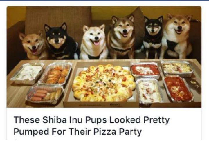 Wow much pizza such party - meme