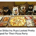 Wow much pizza such party
