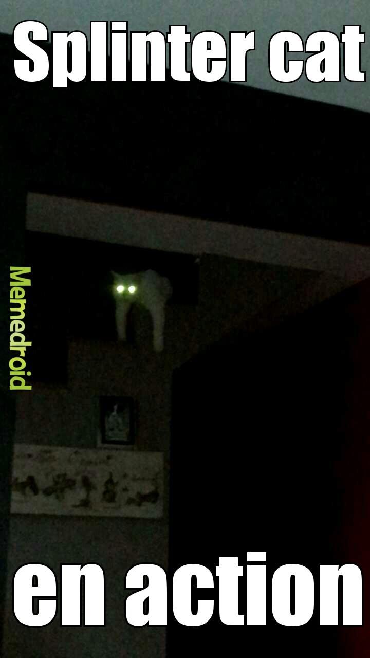 Splinter cat - meme