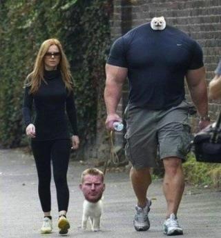 Walking my human. - meme