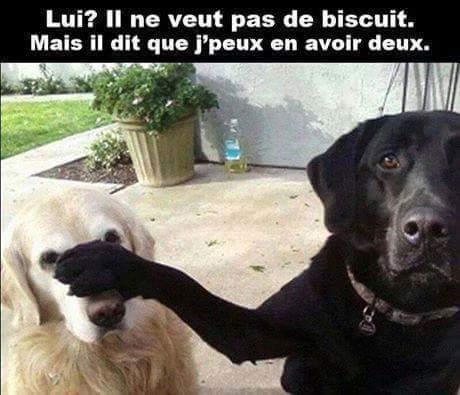 C'est du dog-racisme!! Lol - meme