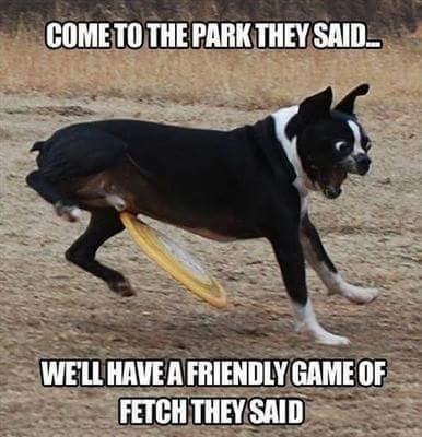 Fetch - meme
