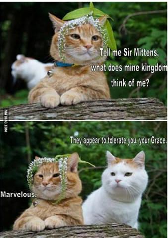 Cats...cats everywhere - meme