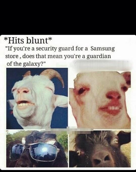 Blunt - meme