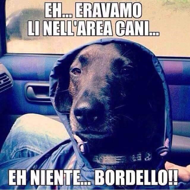 Bordello! - meme