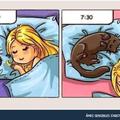 Ne pas dormir avec son chat x3