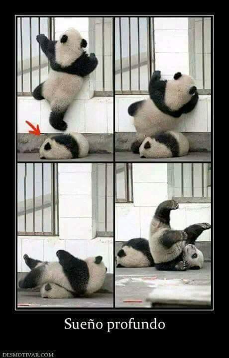 Pobre panda - meme