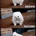 omg it's cute ;-;