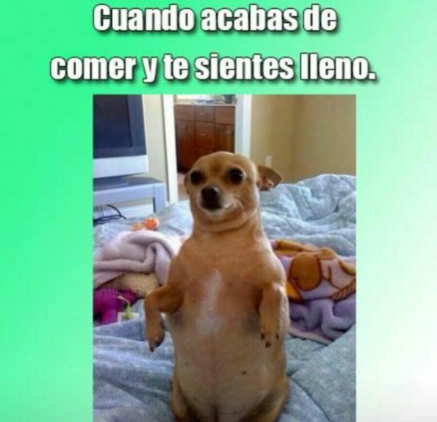 Imágenes con frases lindas de gordas - Memes graciosos de gorditas bonitas - arjona problema dieta