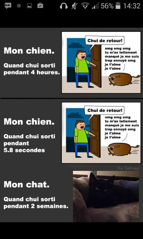 Les chats sont des enculés *^* - meme