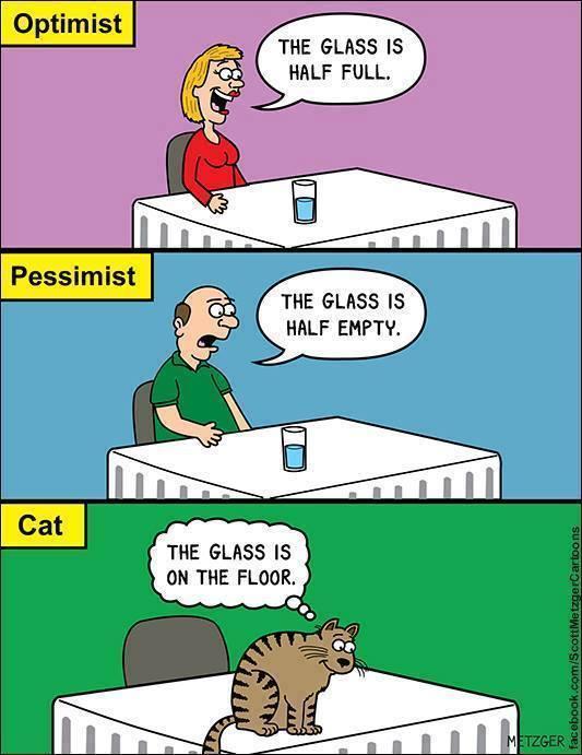 Ccats FTW - meme