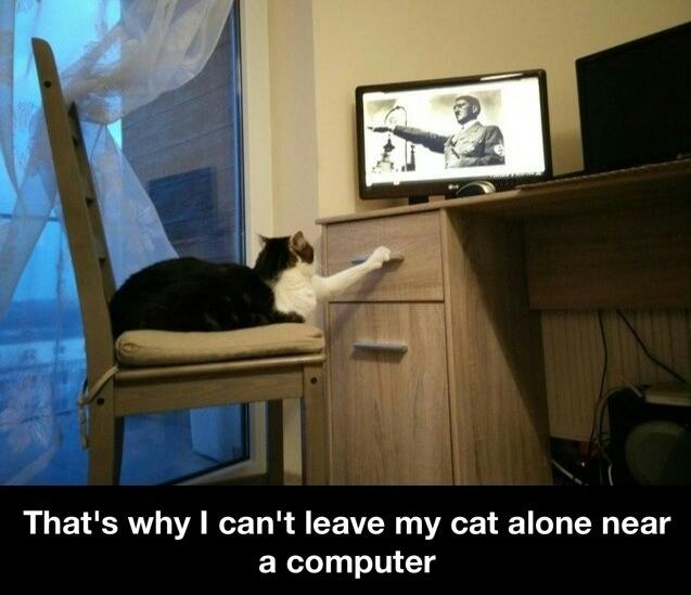 Good Kitty - meme