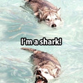 Like a shark but not