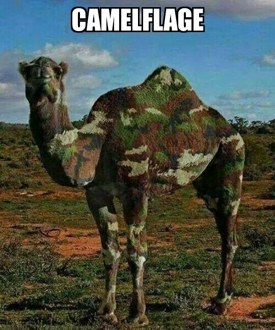 I dunno, I don't see a camel anywhere. - meme