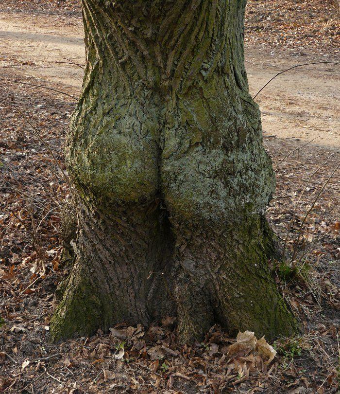 L'arbre ... - meme